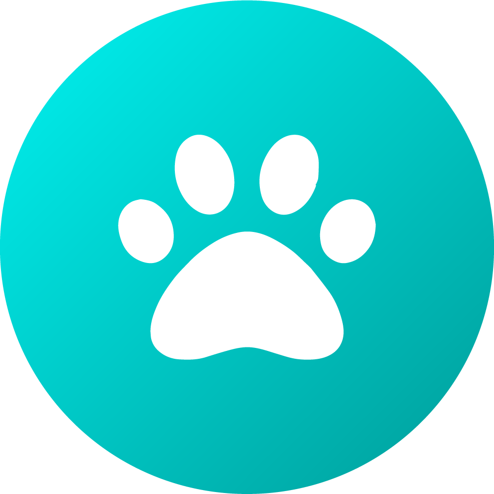 "Lupine Collar Large 1""16-28""  Dapper Dog"